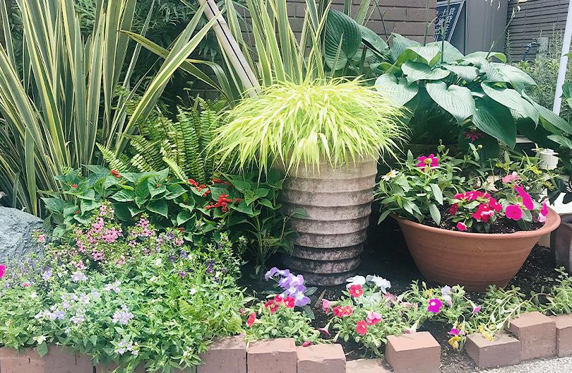 夏の花壇植栽例
